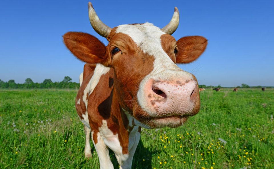 Мясо в прикорме ребенка: кролик, говядина, индейка и другие виды мяса