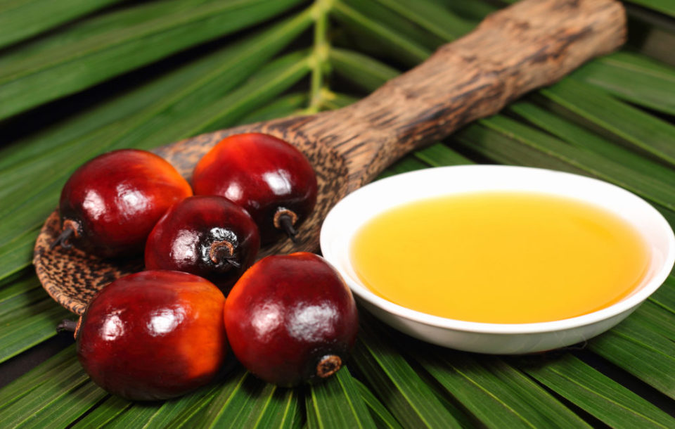 5 вопросов о пальмовом масле и ответы на них
