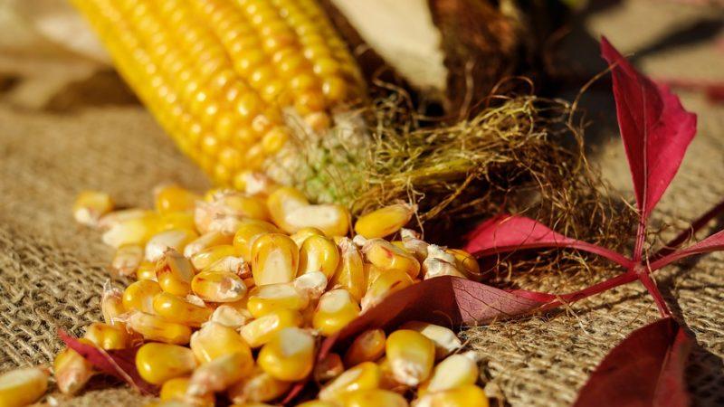 В каком возрасте можно давать ребенку кукурузу?
